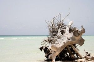 bahamas spiaggia riserva